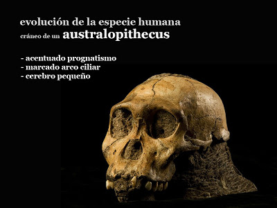 Hallan huellas fósiles de un posible australopiteco en Álora