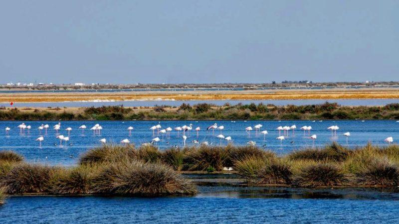 Empresarios de Doñana se convierten en referente turismo naturaleza