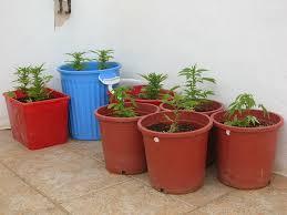Una detenida tras desmantelar una plantación de marihuana en su vivienda en Rute