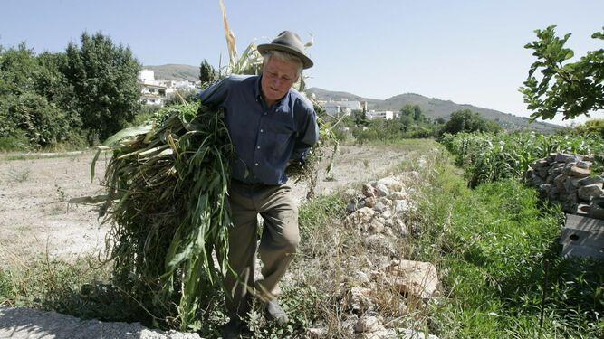 El 17 % de la población andaluza reside en zonas rurales