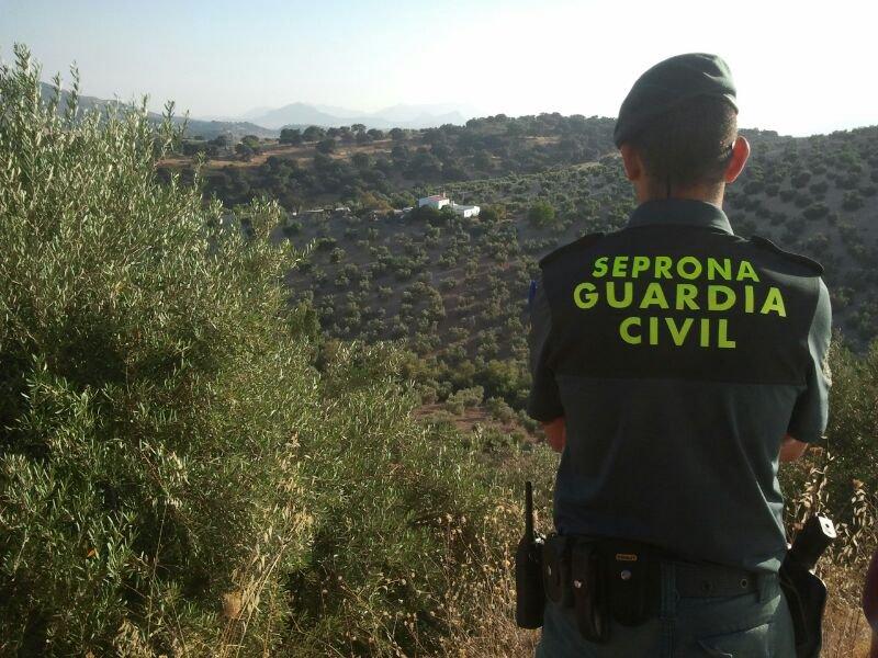 Intervenida en Alcalá de Guadaíra una tonelada de jurel inmaduro